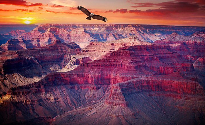 grand canyon west rim at sunset with eagle flying